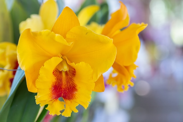 Kwiat orchidei w ogrodzie orchidei w zimowy lub wiosenny dzień.