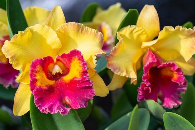 Kwiat orchidei w ogrodzie orchidei