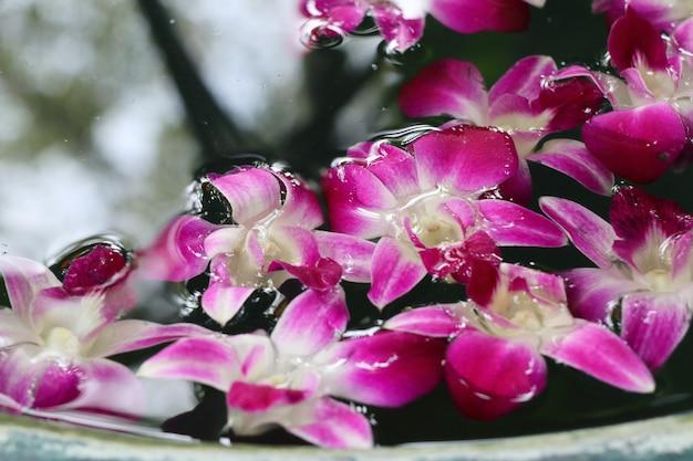 Kwiat orchidei w słoiku wody