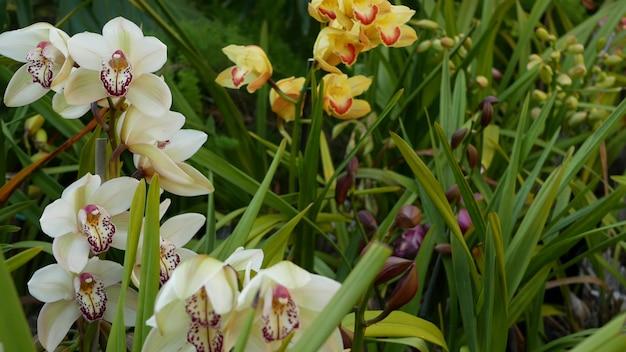 Kwiat orchidei w zielonych liściach. elegancki kolorowy kwiatowy kwiat. egzotyczna dżungla tropikalna dżungla botaniczna atmosfera. naturalny ogród żywa estetyczna zieleń raju. kwiaciarstwo dekoracyjne