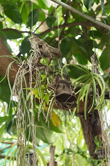 Kwiat orchidei został powieszony pod wielkim drzewem
