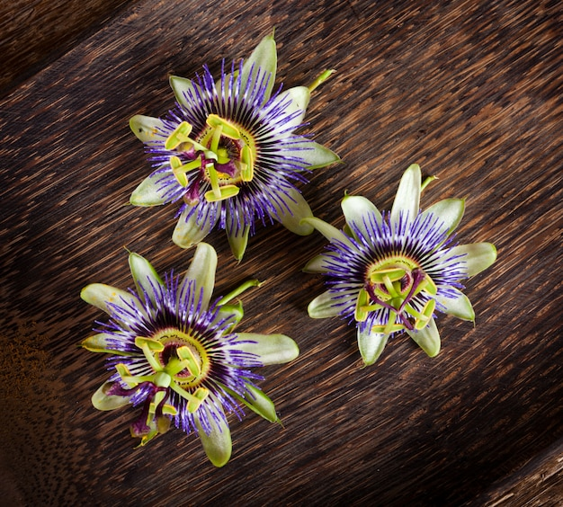 Kwiat passionflower