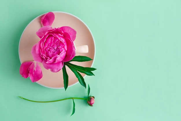 Kwiat, piwonia pączek na różowym talerzu. widok z góry
