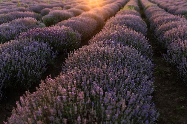Kwiat pole piękny krajobraz