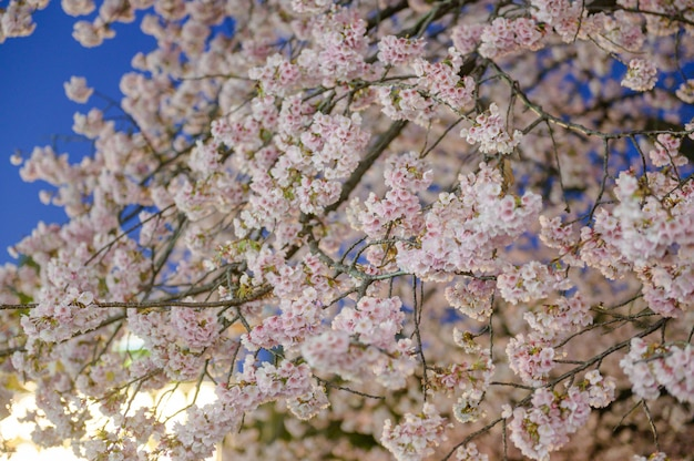 Kwiat różowej sakury i lampa