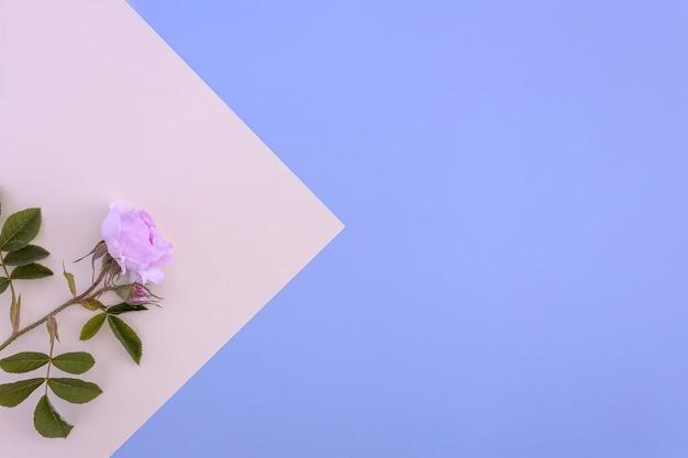 Kwiat róży i kartka papieru