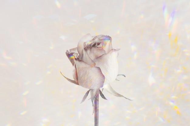 Kwiat róży na holograficznym zasobie projektowym