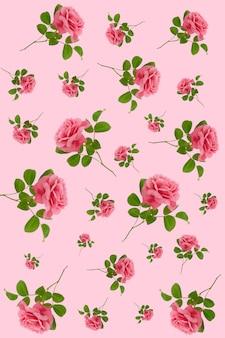 Kwiat róży wzór. różowe róże z zielonymi liśćmi. kwiecisty tło.