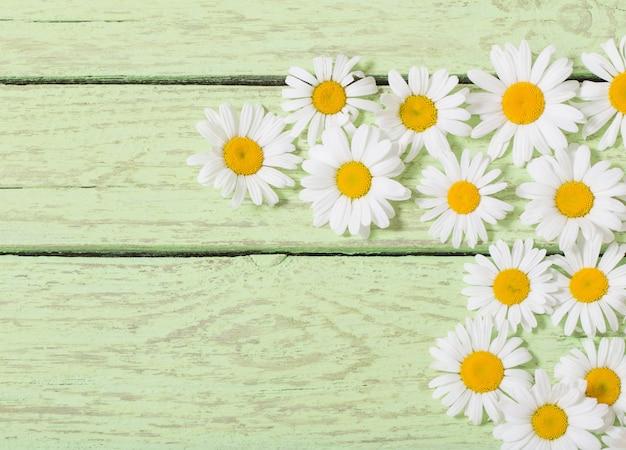 Kwiat rumianku na niebieskiej przestrzeni drewnianej