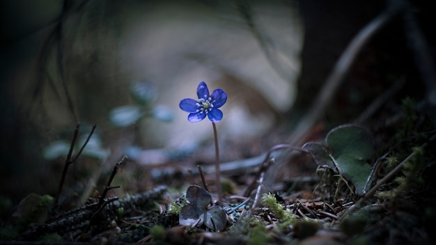 Kwiat solo w lesie