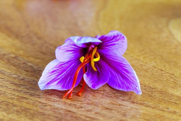 Kwiat szafranu zbliżenie na powierzchni drewnianych. kwiat krokusa