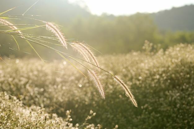 Kwiat trawy ze światłem