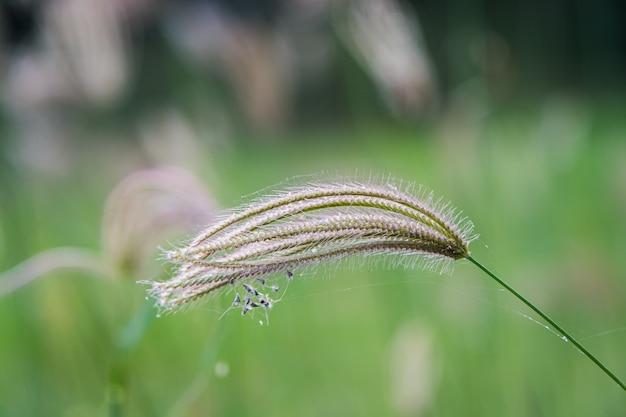 Kwiat trawy