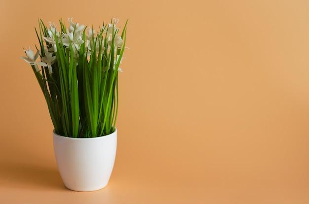 Kwiat w białej doniczce na pomarańczowo