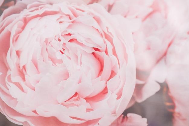 Kwiat w delikatnym pastelowym kolorze w stylu rozmycia