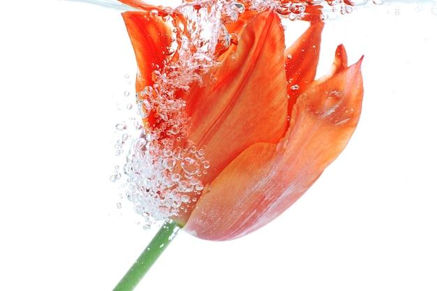Kwiat w gazowanej wodzie