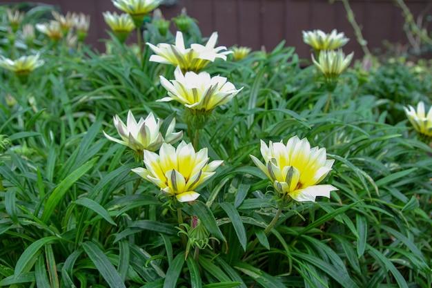 Kwiat w ogrodzie w singapurze