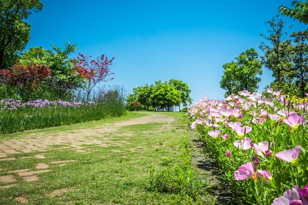 Kwiat w parku