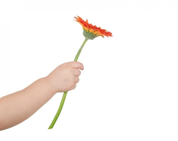 Kwiat w ręku