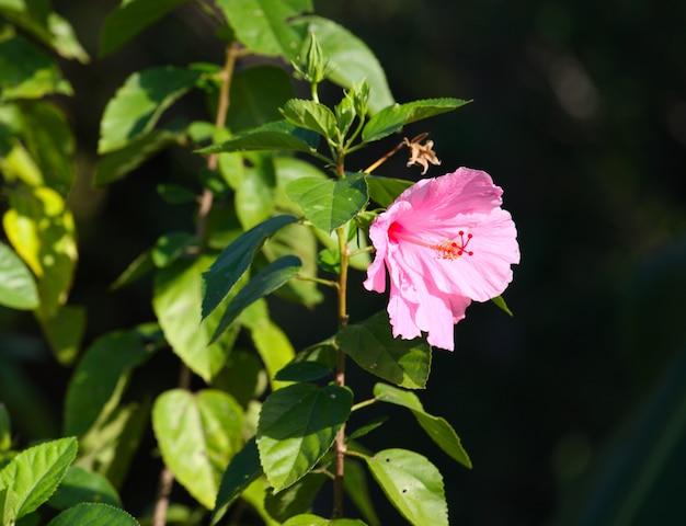 Kwiat w słońcu
