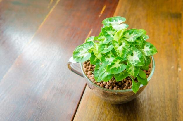 Kwiat waza na drewnianym stole w sklep z kawą