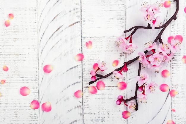 Kwiat wiśni. różowe kwiaty sakury.
