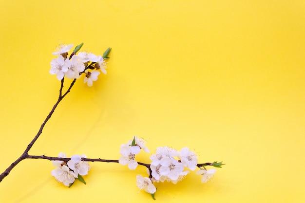 Kwiat wiśni, wiosna, wiśnia