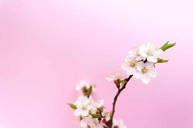 Kwiat wiśni, wiśniowe drzewo