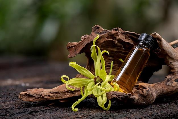 Kwiat ylang-ylang lub cananga odorata i olejek eteryczny o charakterze naturalnym.