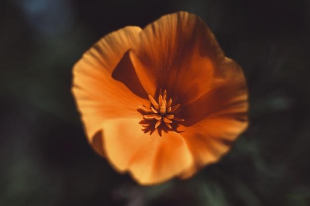 Kwiat z bliska