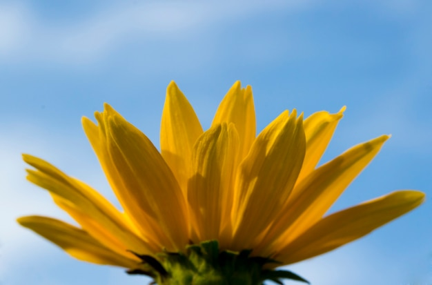 Kwiat z żółtymi płatkami na tle nieba od dołu