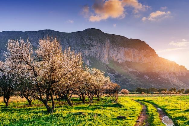 Kwiatonośni drzewa przy zmierzchem w górach