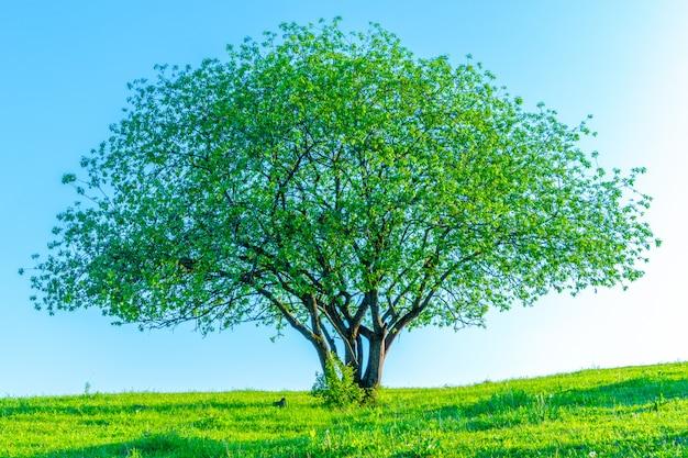Kwiatonośny drzewo na niebo ścianie