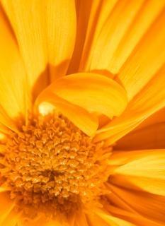 Kwiatów, flory, ciepło