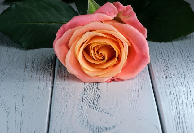 Kwiatowa kartka świąteczna z piękną różą na stole zbliżenie makrofotografii