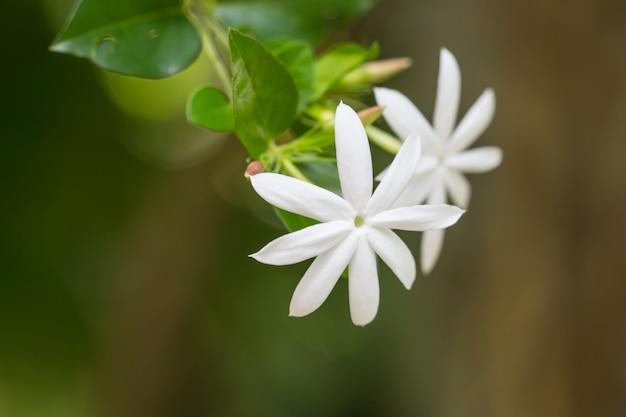 Kwiatowy charakter tła białych kwiatów