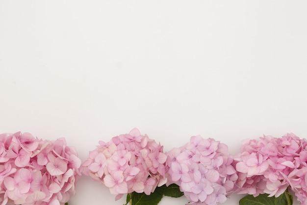 Kwiatowy makieta z różowymi kwiatami hortensji na białym tle