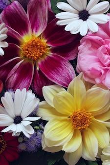 Kwiatowy tło kwiaty ogrodowe dalie widok z góry płasko leżał bukiet lato naturalne tło