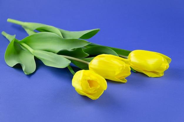Kwiatowy tło trzy żółte tulipany na niebieskim tle z miejsca kopiowania tekstu koncepcji na wielkanoc wiosna ślub dzień kobiet lub dzień matki