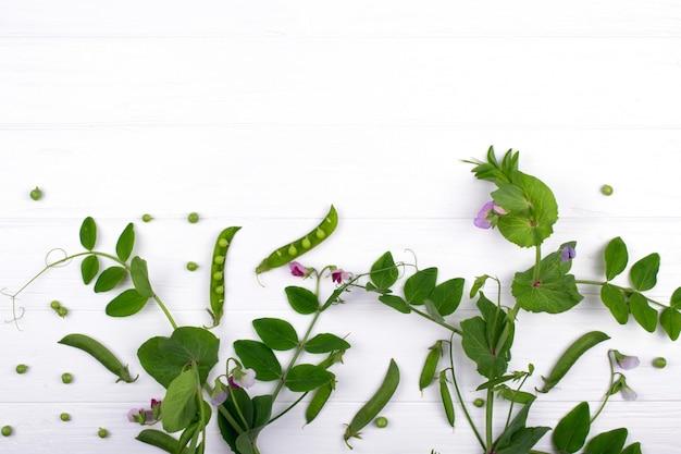 Kwiatowy tło zielnych. zielony groszek wynika z fioletowy kwiat i liść, strąki na białym tle. skopiuj miejsce