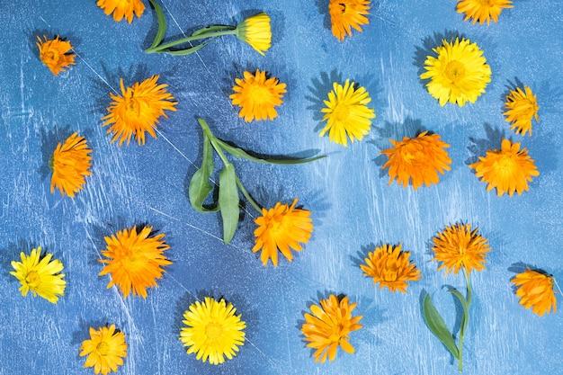 Kwiatowy wzór kwiatów nagietka na niebiesko
