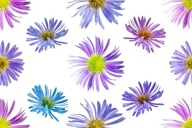 Kwiatowy wzór z kwiatów aster alpejski. białe tło na białym tle. zbliżenie. fotografowanie makro. koncepcja druku i projektowania.