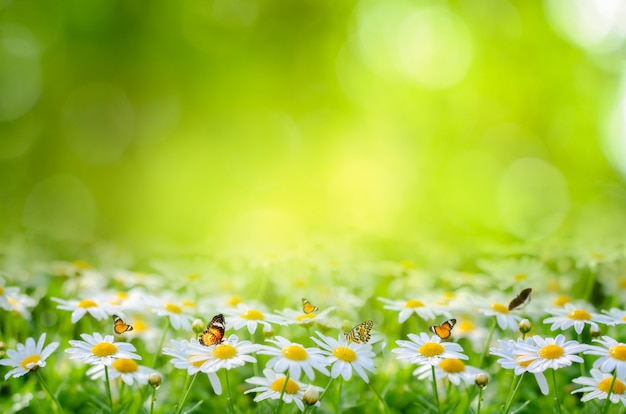 Kwiatu liścia tła bokeh plamy zieleni tło