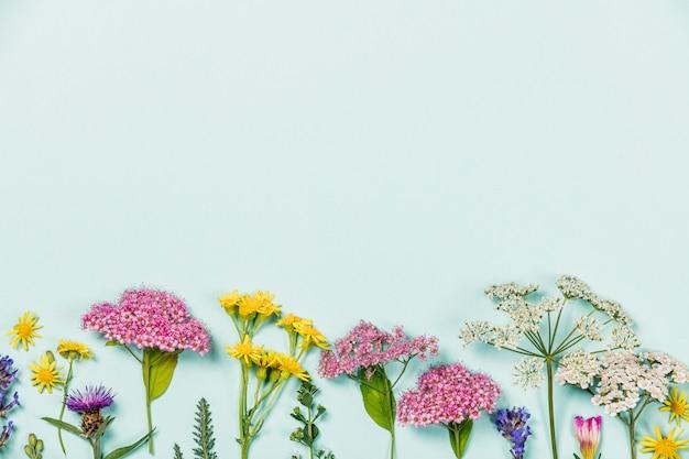 Kwiatu skład na błękitnym tle z copyspace