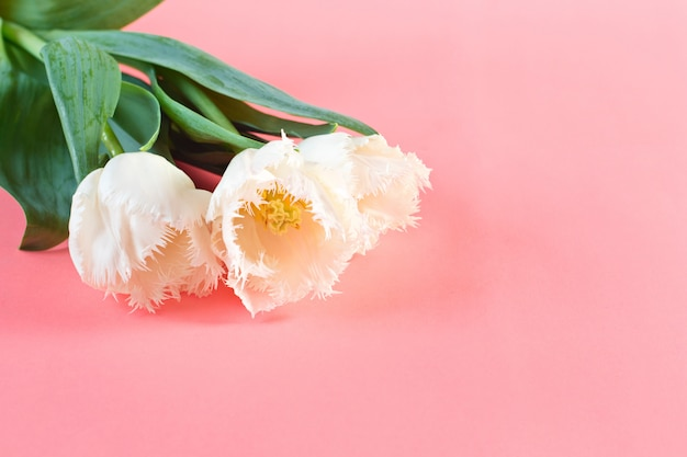 Kwiaty 8 marca. dzień kobiet. gratulacje. wiosna. wiosenne kwiaty. tulipany