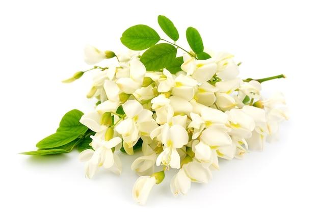 Kwiaty akacji z liśćmi na białym tle