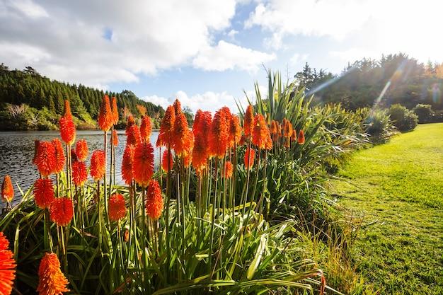 Kwiaty aloesu kwitną na brzegu jeziora, nowa zelandia