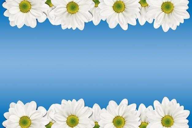 Kwiaty białe na niebiesko