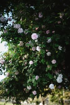 Kwiaty białe z płatkami