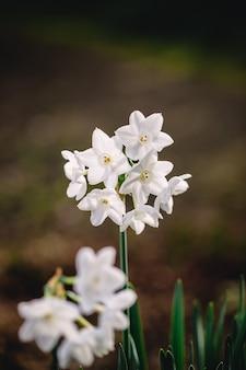 Kwiaty białe z zielonymi liśćmi